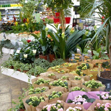 12-schley-essen-zimmerpflanzen