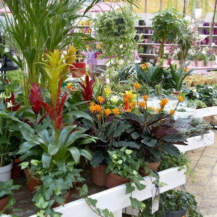 13-schley-essen-zimmerpflanzen
