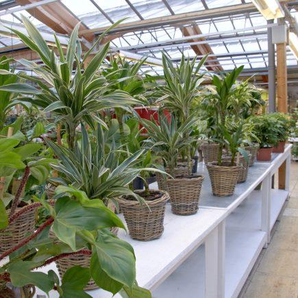 15-schley-essen-zimmerpflanzen