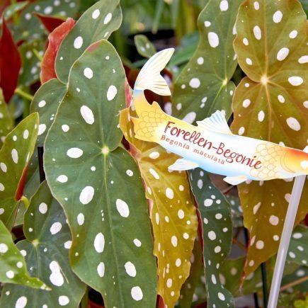 16-schley-essen-zimmerpflanze