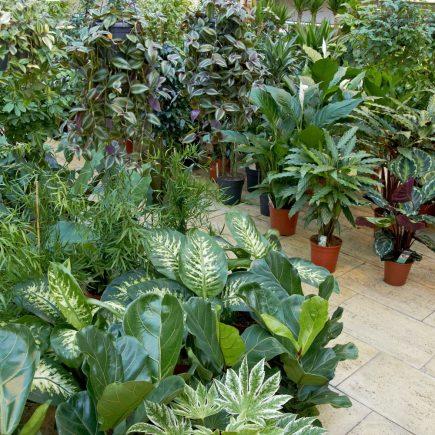 17-schley-essen-grünpflanze