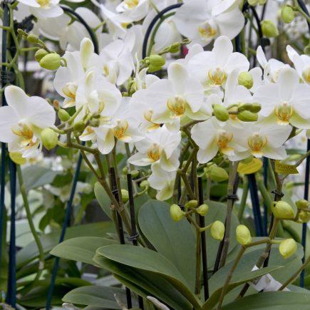 8-schley-essen-orchideenschau