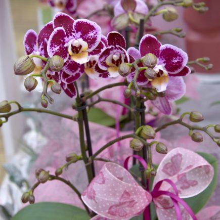 9-schley-essen-orchideenschau