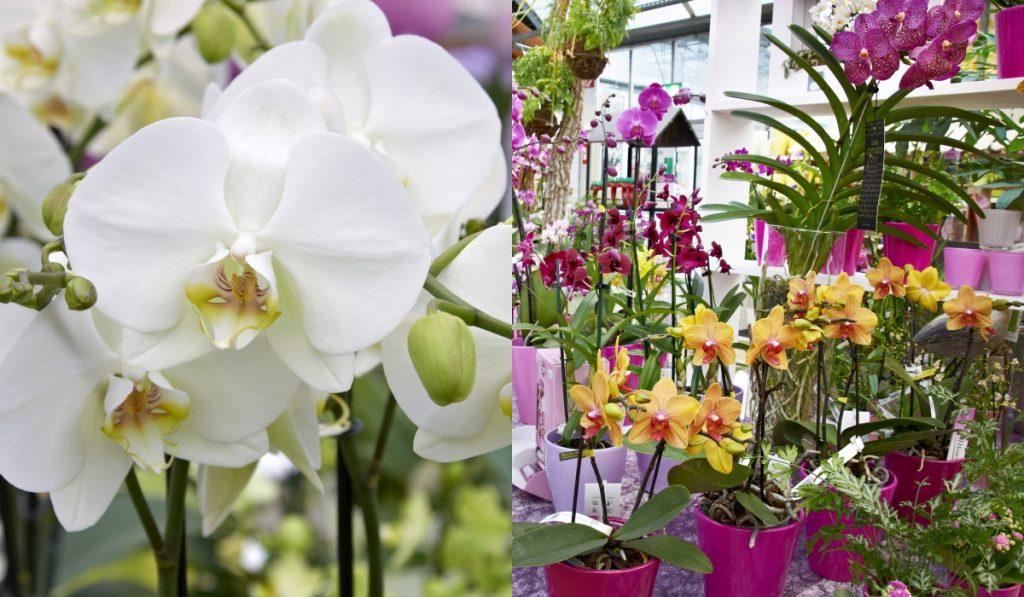 schley-essen-orchideen
