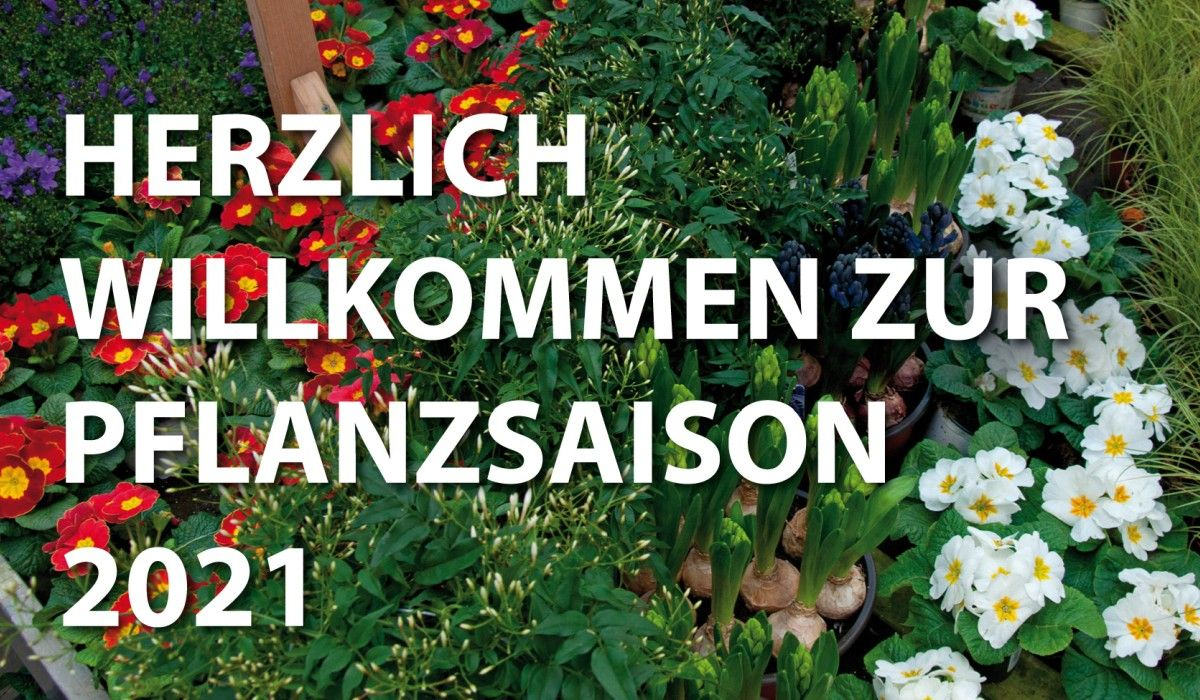 schley-essen-pflanzsaison