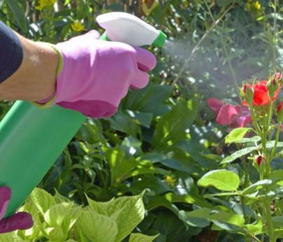 Schädlinge, Krankheiten? Unser Pflanzendoktor hilft weiter